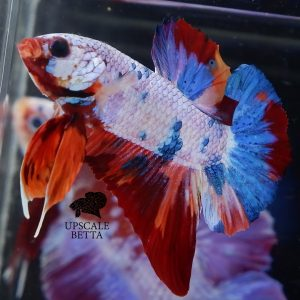 betta-fish-fin-rot-treatment