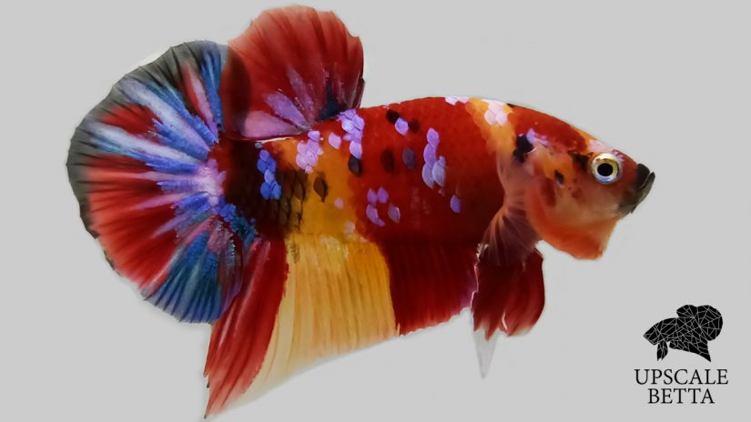 Here Are 5 Best Fish Compatible With Betta