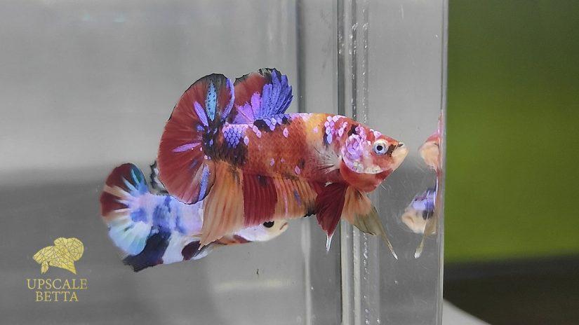 how-to-keep-betta-fish-healthy